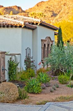 1351 Best Palm Springs Style Gardening In The Desert Images