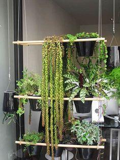 c5c7664fa61a30d037d68096d40f4a9f Outdoor Plants, Outdoor Gardens, Room Screen, Decoration, Home Art, Flora, Art Deco, Indoor, Patio