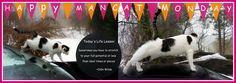 MONCAT-MONDAY-FELINE-LIFE-LESSON @CATWISDOM101 #CATS #QUOTES