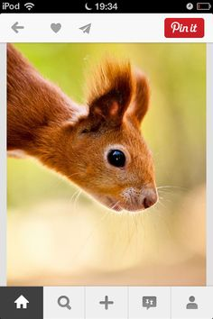 """""""When the SQUIRREL comes into our lives it is often a message for us to have more fun, and take life a little less seriously. Also a sign that it might be time to look into our own provisions."""" so that's why we had a squirrel!"""