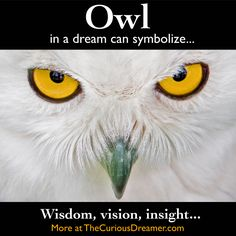 An owl as a dream symbol can mean... More at TheCuriousDreamer.com... #dreammeaning #dreamsymbols