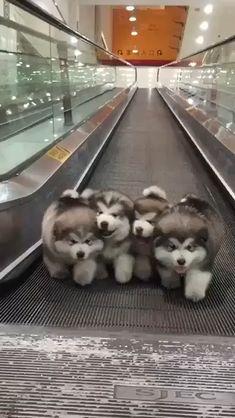 Baby Animals Super Cute, Cute Little Animals, Cute Funny Animals, Funny Dogs, Cute Dog Memes, Funny Animal Jokes, Baby Farm Animals, Cut Animals, Funny Birds