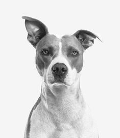 Does your puppy have AN absolute meltdown on every occasion you permit the house? Your dog could be affected by puppy separation anxiety. Separation anxiety in dogs ranges from gentle to severe. Guide Dog Training, Dog Training Methods, Training Your Dog, Training Kit, Training Videos, Training Courses, Cute Puppies, Cute Dogs, Dogs And Puppies