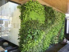 Jardin vertical Muro verde #fachadasverdes