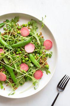 Farro, Arugula, & Pea Salad | pea tendrils, snap peas, pickled radish