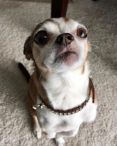Chopper #highrisepetcare #chicagodogdiary #chicagodogs #happydog #chicago #dog #dogs #dogsofinsta #dogsofchicago #dogsofchicago #dogsofinstgram #dogsofig