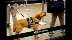 When Transportation Security Administration bomb-sniffing dogs retire from patrolling airports and elsewhere, they need good homes and people to care for them, Fox5NY.com reported.