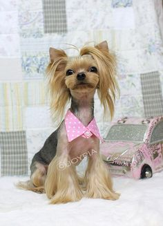 With one of the most fanciful and creatively designed pet clothing and accessories industries on the planet- Japan's pet owners have a plethora of options for giving their pets that one of a kind persona and achieving extras that are an extension of their personal self expression.