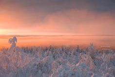 Lost in light (Saariselkä, Lapland, Finland) by Nina Lindfors Snow And Ice, Fire And Ice, Lapland Finland, Let's Have Fun, Moomin, Winter Wonderland, Scenery, Wanderlust, Behance