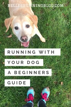 A Beginners Guide to Running With Your Dog Running Training Plan, Running Routine, Running Workouts, Running Tips, Training Your Dog, Fun Workouts, Running Women, Beginners Guide To Running, Beginner Running
