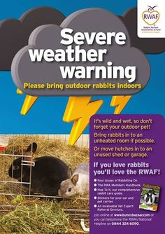 It's wild and wet, so don't forget your outdoor pet...  The Rabbit Welfare Association and Fund.  A Hutch Is Not Enough!