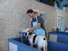 blue Pet Spa, Dog Store, Animal House, Dogs, Blue, Pet Store, Pet Dogs, Doggies