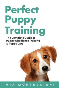 So you have a new puppy…and you're wondering if this guide is for you?  via @KaufmannsPuppy