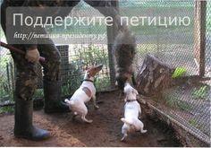 Ввести уголовную ответственность за организацию, работу в них и использование животных для натравливания своих собак. Животные подвергаются мучениям с моме