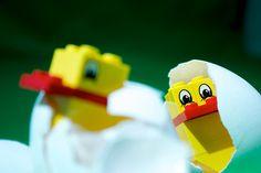 Hatching Lego