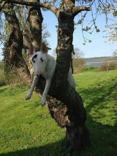 I'm bored and thought I would climb a tree! lol