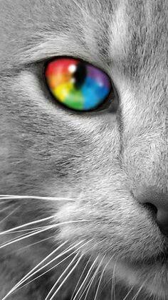 Rainbow cat eye