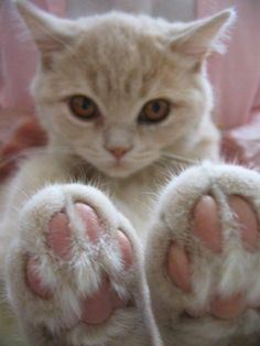 Cute paws Oh, hewo, dare! Iz getting a ped-e-koo on my tootsie theyz gonna wook boots-see-full!