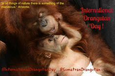 Celebrate Tomorrow with International Orangutan Day. RePIN THIS and show your support