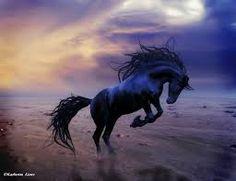 wild horses - Google Search