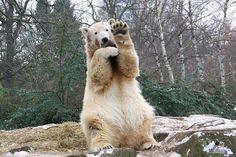 Hello bear.