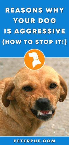 Rose Glen North Dakota ⁓ Try These Petco Dog Training Nyc
