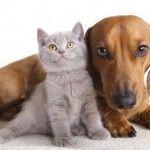 Receitas naturais para tratar variados problemas de cães e gatos