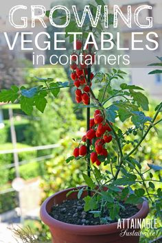 Growing vegetables in pots for beginners: Choosing the *right containers for your urban vegetable garden can make your limited space productive.