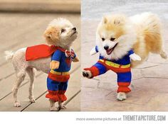 Saving the world, one paw at a time…