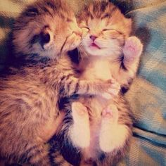 Kittens on We Heart It - http://weheartit.com/entry/82761252