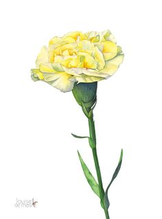 Carnation watercolor painting carnation print 5 by by LouiseDeMasi