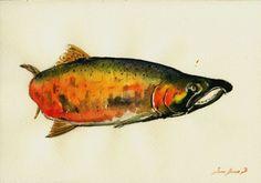 8x11 Coho Salmon Pacific Silver Fish Fishing Original Art Watercolor Juan Bosco   eBay