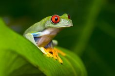 Are frogs poisonous to dogs? Pet Life, Frogs, Family Life, Pets, Animals, Animales, Animaux, Animal, Animais
