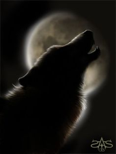 ~Even a man who is pure in heart says his prayers by night ~ may become a wolf when the wolfbane blooms the autumn moon is bright ~* Bark At The Moon, Howl At The Moon, Wolf Spirit, Spirit Animal, Beautiful Creatures, Animals Beautiful, Wolf Pictures, Wolf Images, Beautiful Wolves