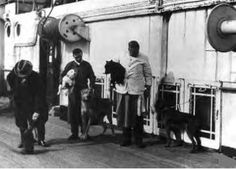 Two dogs were among the Titanic survivors.
