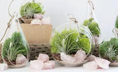 Террариумы для растений, или Флорариумы. Как устроить террариум для цветов? Фото - Ботаничка.ru