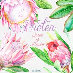 Protea Queen of Flowers Wedding Watercolor Flowers and leaves handpainted clipart invite greeting card DIY invitations flowers frame Wreath Watercolor, Watercolor Leaves, Watercolor Wedding, Floral Watercolor, Watercolour, Protea Art, Diy Invitations, Floral Invitation, Invite