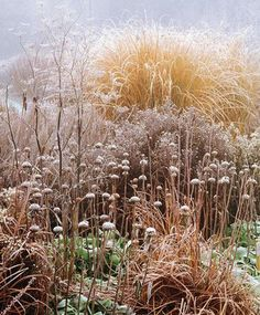 Winter Garden by Val Bourne
