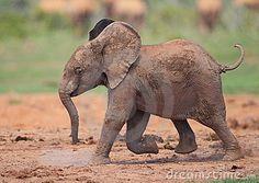 Google Image Result for http://www.dreamstime.com/baby-elephant-running-thumb17157268.jpg