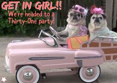 Cutest dog pic ever!! Funny meme for Facebook VIP group or party! Thirty-One spring/summer 2018 www.mythirtyone.ca/sabrinawhite