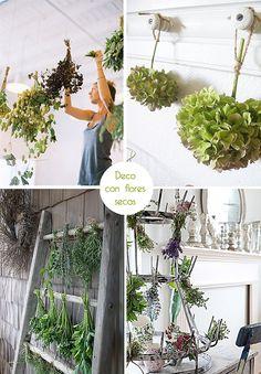 flores secas : via MIBLOG