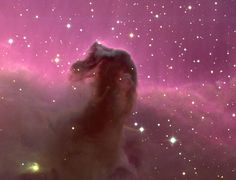 The Horsehead Nebula. One of the most identifiable nebulae in the sky, the Horsehead Nebula in Orion, is part of a large, dark, molecular cloud. Cosmos, All Nature, Science And Nature, Horsehead Nebula, Orion Nebula, Wow Photo, Astronomy Pictures, Hubble Pictures, Across The Universe