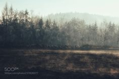 Back To The Roots by Eulendieb