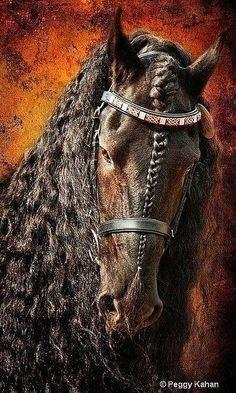 What a beautiful horse!! Looks like a warrior horse.