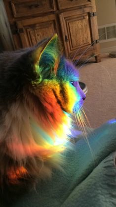 my cat was sitting in the middle of a rainbow I thought it was cool - Cats Love Cat Wallpaper, Animal Wallpaper, Cute Kittens, Cats And Kittens, I Love Cats, Cool Cats, Beautiful Cats, Animals Beautiful, Funny Cats