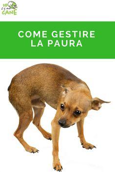 Sei in grado di capire se il tuo cane è spaventato?