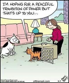 12 Clever Comics About Cats And Dogs That Are Too Funny Not To See - World's largest collection of cat memes and other animals Funny Animal Pictures, Funny Animals, Cute Animals, Funny Horses, Crazy Cat Lady, Crazy Cats, The Awkward Yeti, Cat Jokes, Cats Humor