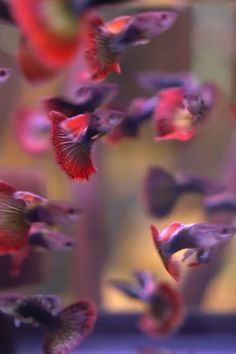 Pretty Fish, Beautiful Fish, Tropical Freshwater Fish, Tropical Fish, Guppy, White Cloud Minnow, Neon Tetra, Nitrogen Cycle, Dumbo Ears