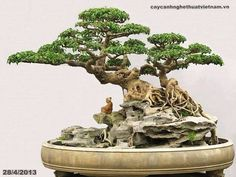 Root over rock bonsai from Vietnam...there are many, many additional beautiful specimens to be found here...https://translate.google.com/translate?hl=en&sl=zh-CN&u=http://www.360doc.com/content/16/1003/15/3723251_595510484.shtml&prev=search
