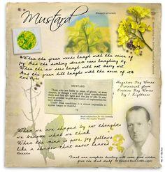 Mustard - Florais de Bach